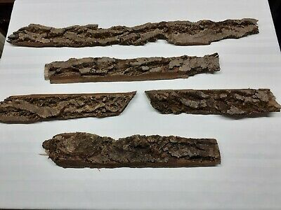 English Walnut Bark 5 Pieces Model Scenery/ Florists  • 16.84€